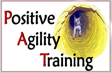Agility Dog Training - South Mountain Dog Training