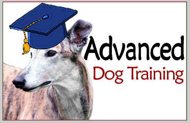 South Mountain - Advanced Dog Training