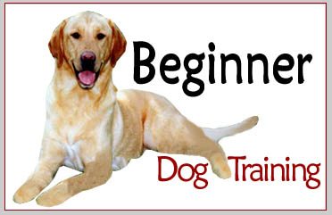 South Mountain - Beginner Dog Training