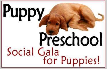 Puppy Preschool Classes - South Mountain Training Center